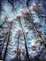 i-phone photography trees
